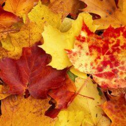 Осенний бизнес на листьях